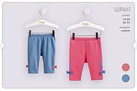Трикотажные шорты-лосины для девочки. ШР 461