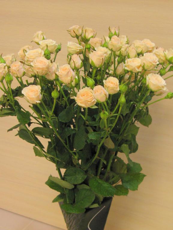 Роза  Яна спрей