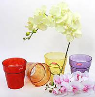 Орхидейница в ассортименте цветов 14.5см, 4 вида