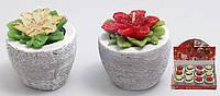 Свеча в керамическом горшочке 6см Пуансеттия, 2 вида в дисплей коробке