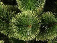 Новогодняя елка Сосна искусственная Пушистая 2,1 м (210 см), фото 2
