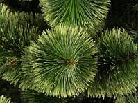 Новогодняя елка Сосна искусственная Пушистая 2,3 м (230 см), фото 2