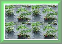 Геотекстиль тканый (агроткань) Agrojutex черный 100 г/кв.м. 2,10х100м Чехия