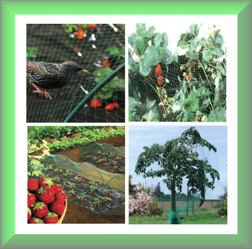Защитная сетка от птиц NORTENE зеленая, (4х100м) Венгрия