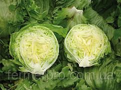 Семена салата Энсамбл \ Ensable 1000 семян Enza Zaden