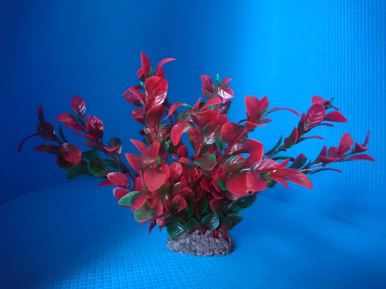 Растение N-22, 20см