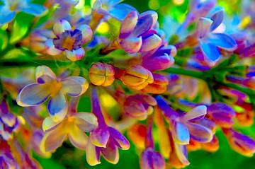 Колористика дома: правила сочетания цветов в интерьере