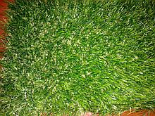 Декоративна трава