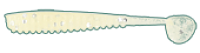 Силикон Kalipso Pigmy Rib Shad 1.6'' (10шт) 410 GWSF NEW 201
