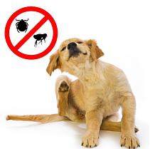 Средства от блох и клещей для собак