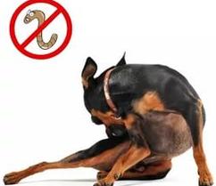Средства от глистов для собак (антигельминтные средства)