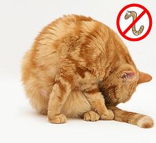 Средства от глистов у котов и кошек (антигельминтные препараты)