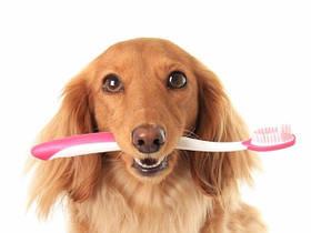 Средства для ухода за зубами собак