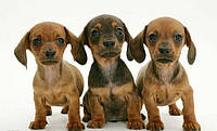Корм для щенков и молодых собак NATURE'S PROTECTION (Натур Протекшн)