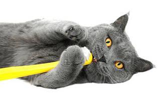 Средства для ухода за зубами кошек