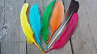 Перья гуся цветные, микс цветов (30 шт в упаковке) 30