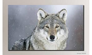 """Картина на холсте """"Волк"""" (HAS-071)"""