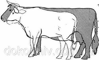Мясокостная мука для животных: свиней, собак, для птицы и др., фото 2