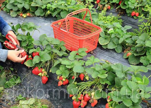 Комплексное Удобрение Екогумінат+  БИО (натуральное для роз, томатов, клубники, малины, капусты, цветов), фото 2