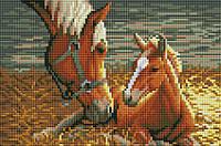 """Набір для алмазної мозаїки """"Коні"""" CF090"""