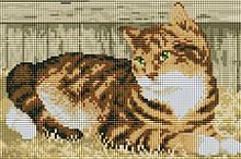 "Набір для алмазної мозаїки ""Котик"" CF095"