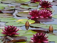 Живое и красочное обрамление водоема.