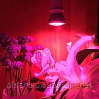 Фитолампа для растений Led 28 E27 230V  Full spectrum, фото 4