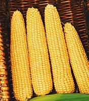 Мегатон F1 насіння кукурудзи суперсолодкої Harris Moran 1 000 г