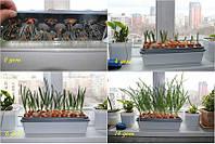 Гидропоника в домашних условиях зелень