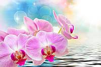 """3D Фотообои флизелиновые """"Орхидея крупным планом"""""""