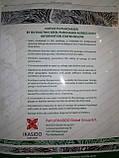 Семена капусты КС 888 F1, 2500 семян, фото 5