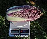 Семена капусты КС 888 F1, 2500 семян, фото 3