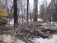 Пилим деревья в Харькове и области