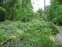 Спилить дерево в Харькове, фото 1