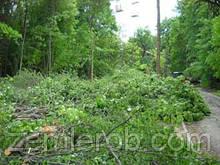 Спилить дерево в Харькове