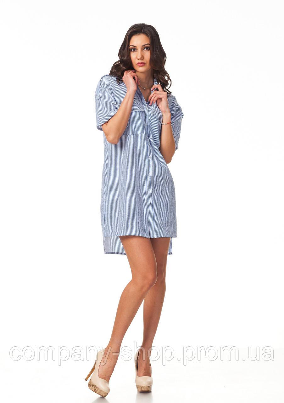 Платье-рубашка хлопковая. Модель П112_хлопок полоска синяя.