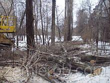 Услуги по спиливанию дерева в Харькове