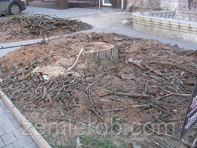 Срубить дерево в Харькове