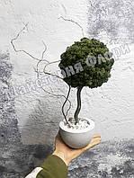 Стабилизированное дерево в стиле бонсай, фото 1