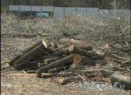 Выкорчевать корень дерева в Харькове