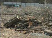 Выкорчевать корень дерева в Харькове, фото 1
