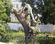 Выкопать дерево в Харькове