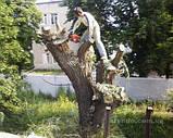 Корчування дерев, фото 2