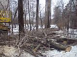 Корчування дерев, фото 4