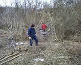 Корчування дерев, фото 5