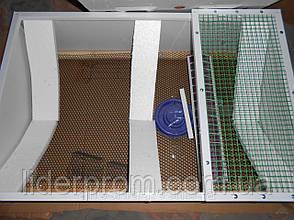 Брудер (ясли) для цыплят Курочка ряба, фото 2