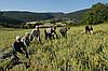 Греческие травы (сухие специи)