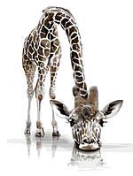 """Картина по номерам """"Забавный жираф"""" 30*40см"""