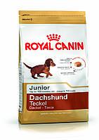Royal Canin Dachshund junior (Роял Канин для щенков породы ТАКСА до 10 месяцев) 1.5 кг