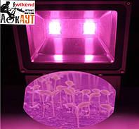 Лампа  для выращивания  рассады 100 Ватт